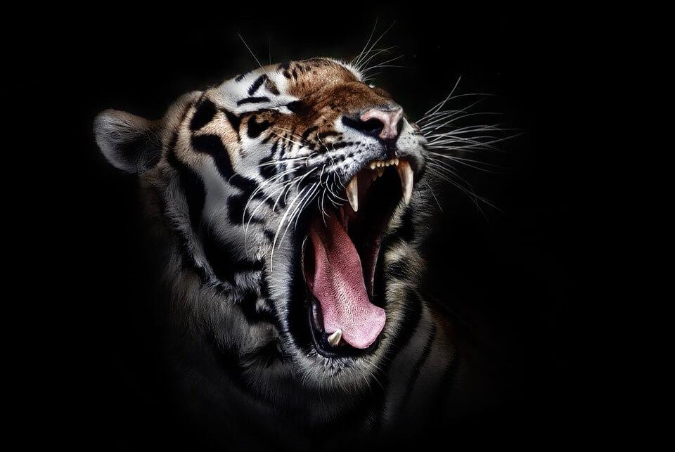 マネーの虎